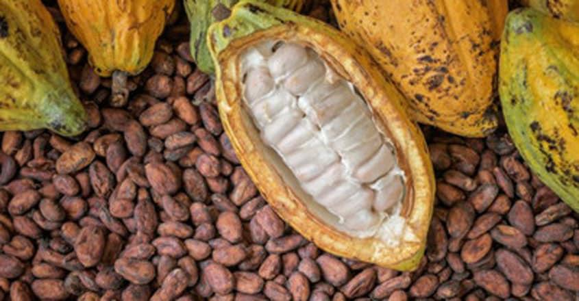 cocoa-pulp