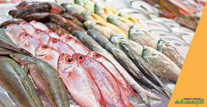 Fraud-in-the-fisheries-sector