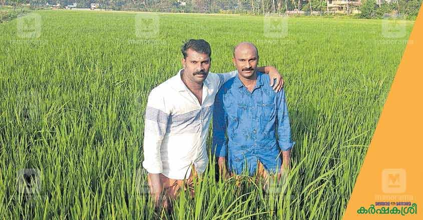 brothers-farming