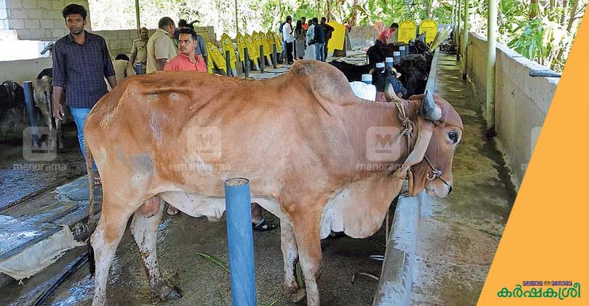 cow-tvm-3