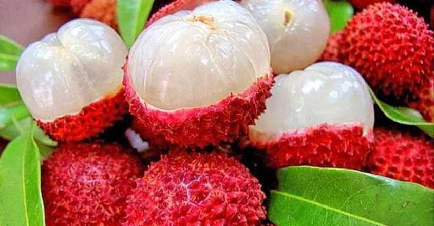 lychees-cultivation-in-kerala