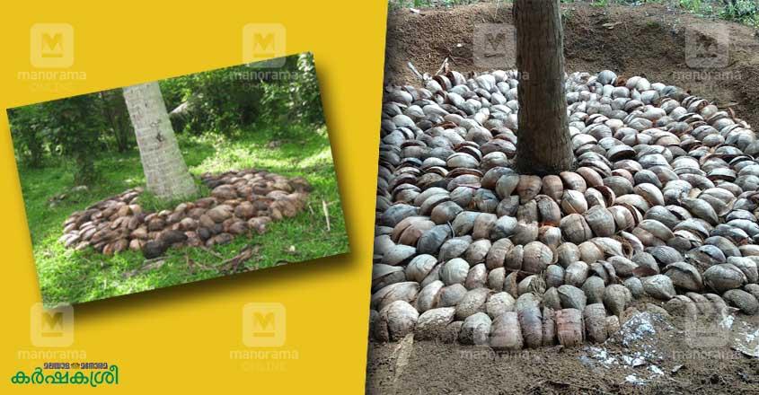 coconut-mulching