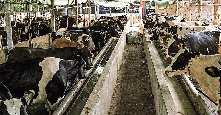 jeevan-diary-farm