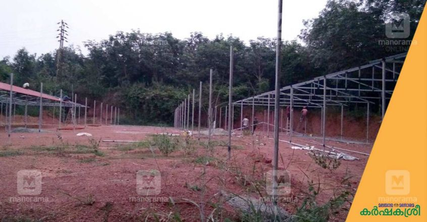 broiler-farm-shed-1