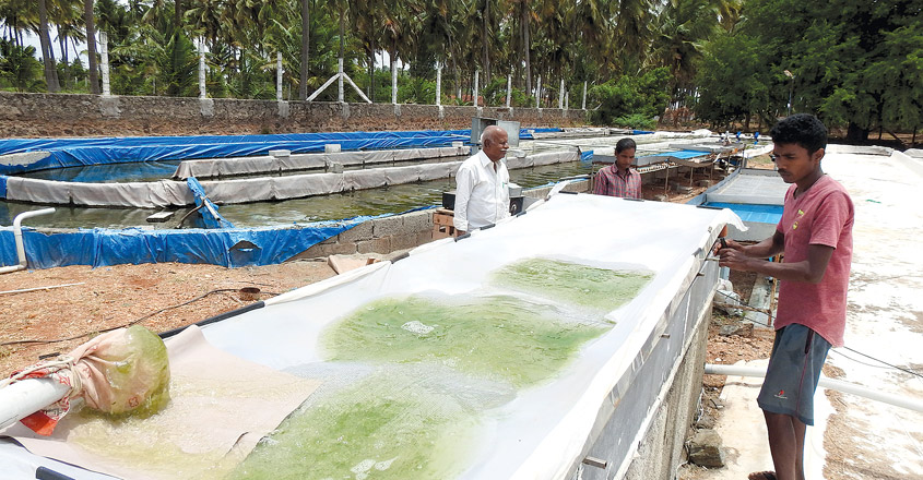 Microalgae-cultivation1