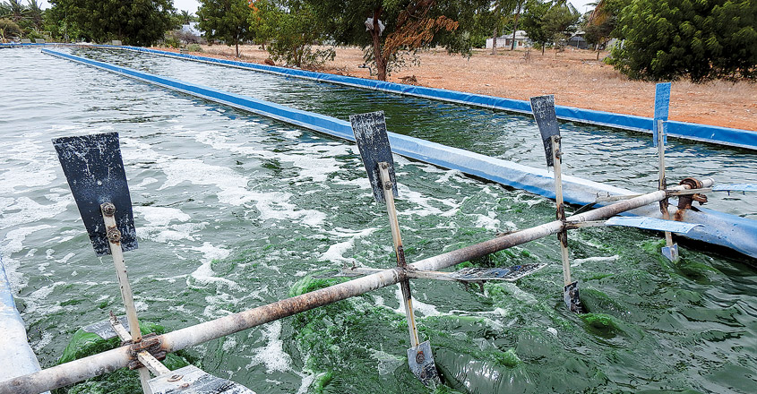 Microalgae-cultivation8