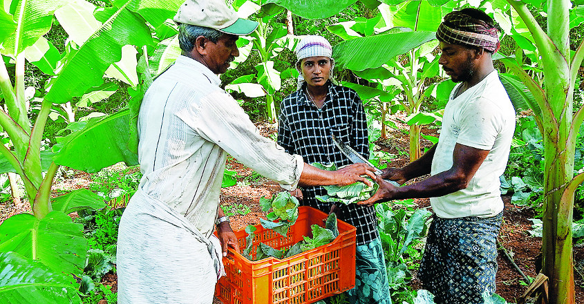 organic-farming-to-double-the-income