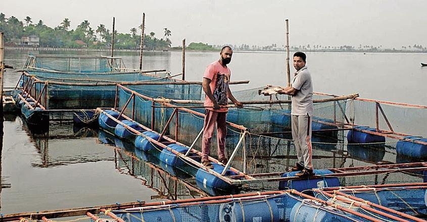 aquaponic-fish-farming