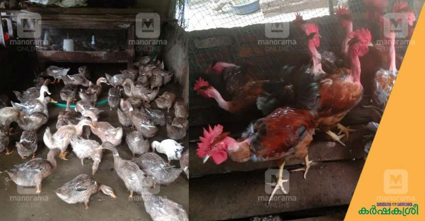 3-roses-poultry-farming