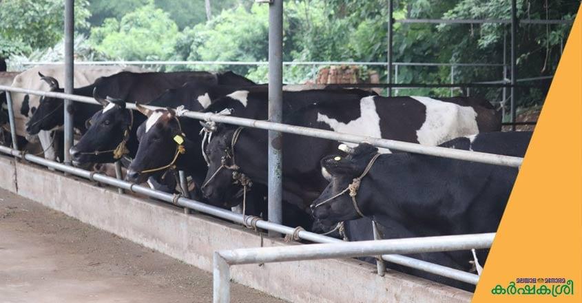 Dairy-farm-1