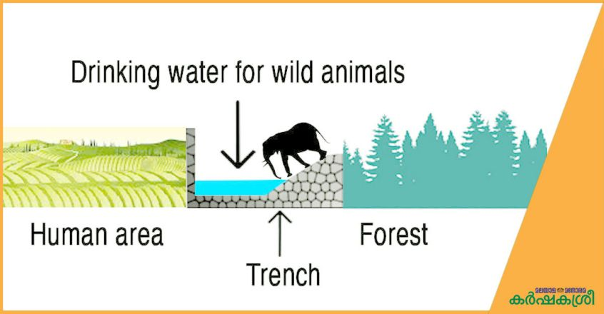 drinking-water-for-animals