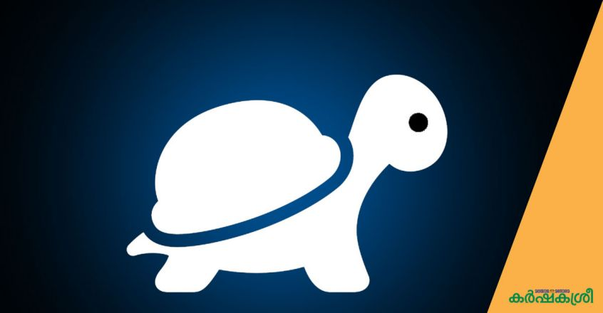 turtle-day-special