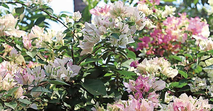 boca-villa-flower1