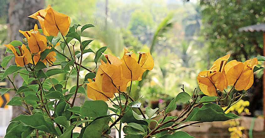 boca-villa-flower2