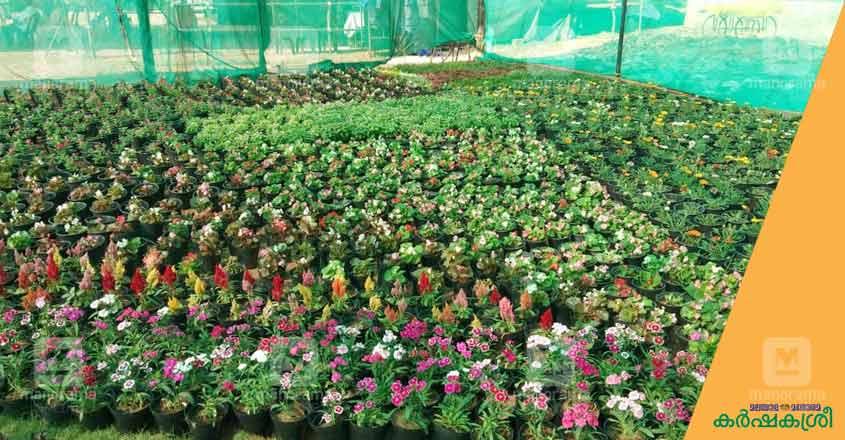 flower-show-ktm-1