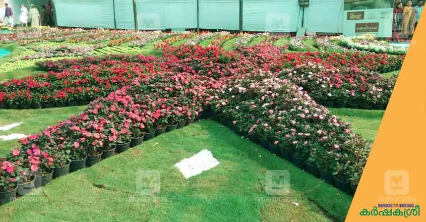 flower-show-ktm-5