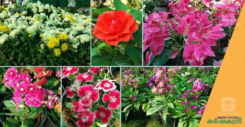 flower-show-ktm-7