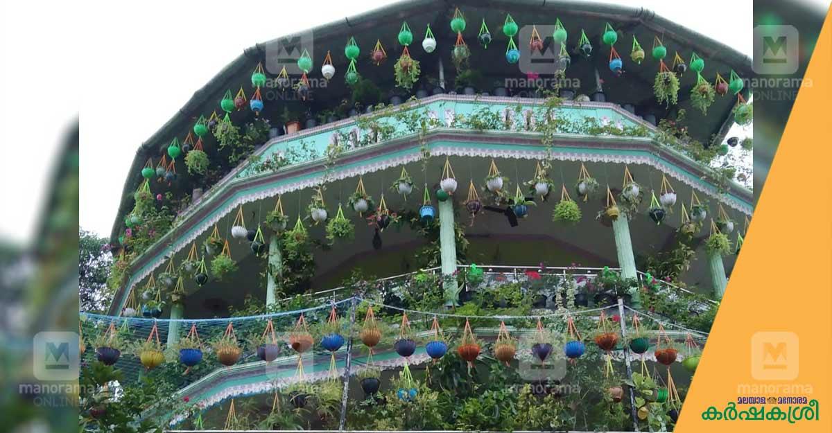 വീടിനു ചുറ്റും 200ൽപ്പരം ഹാങ്ങിങ് പ്ലാന്റുകൾ; ഇത് സജിന്റെ സ്വപ്നവീട്