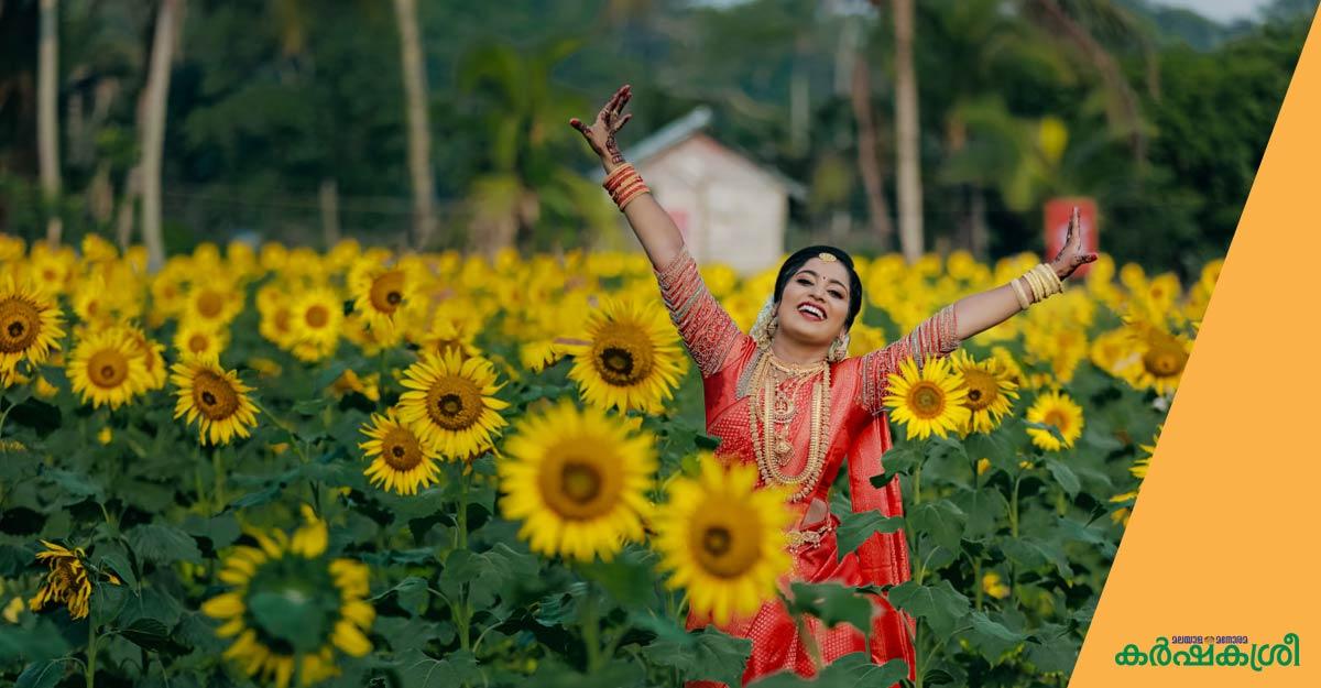 ദിവസം 2000 സന്ദര്ശകര്, സുജിത്തിന്റെ സൂര്യകാന്തിപ്പാടം സൂപ്പര്ഹിറ്റ്