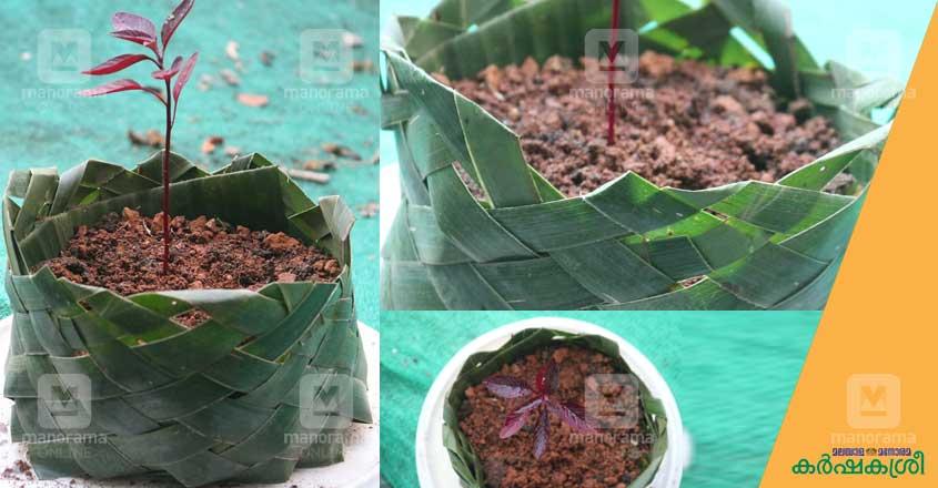 grow-bag-1