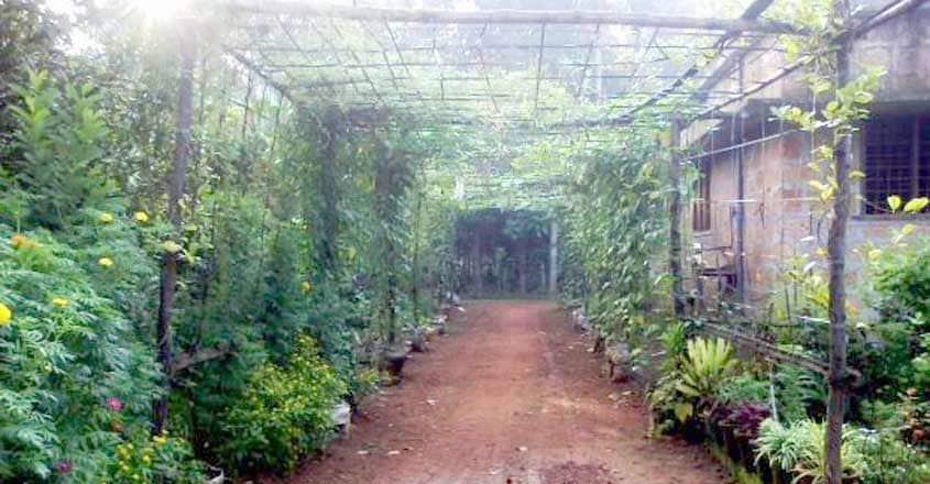 vegetable-garden-4