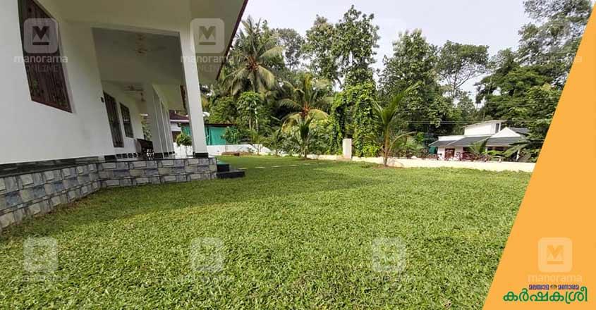 bufallo-grass