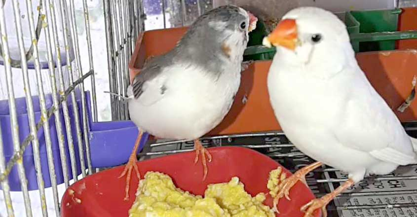 egg-food