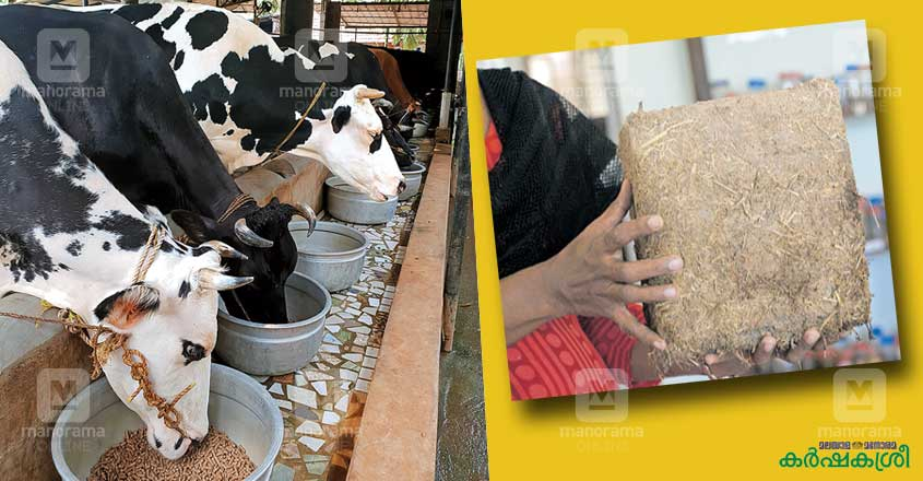 cow-feed-1