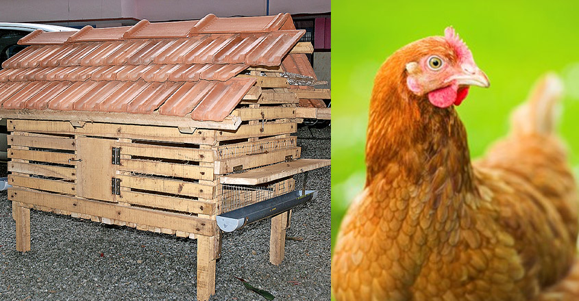 hen-home