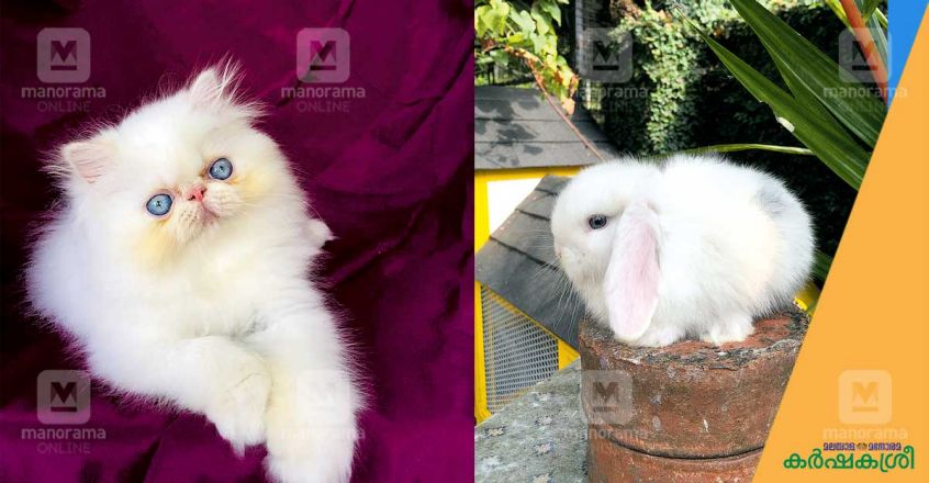 hisham-rabbit