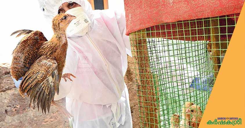 avian-flu-1