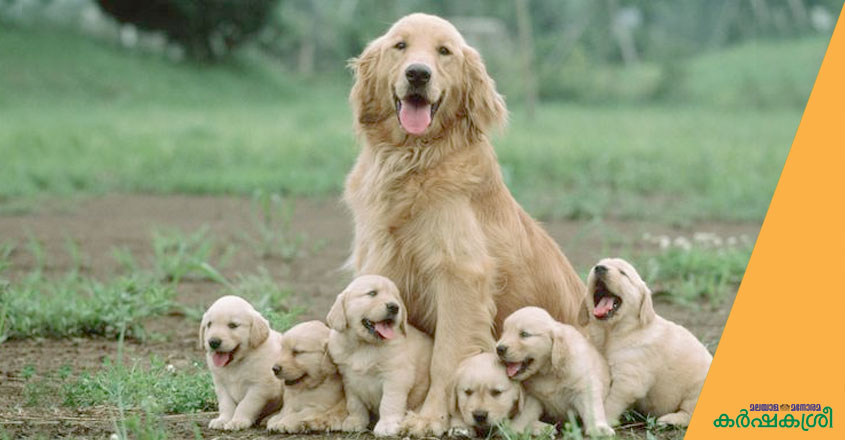 dog-and-puppies-2