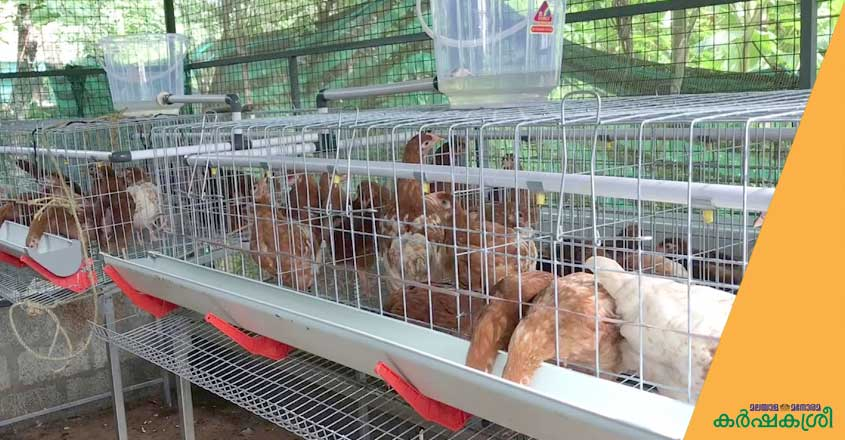 smart-poultry-cage