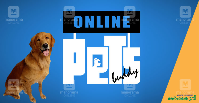 online-pets