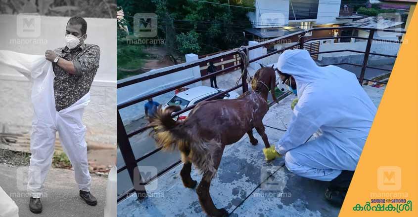 covid-goat-1
