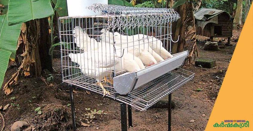 poultry-cage-2