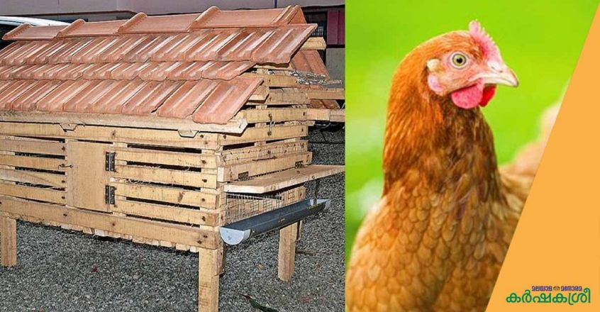 poultry-cage