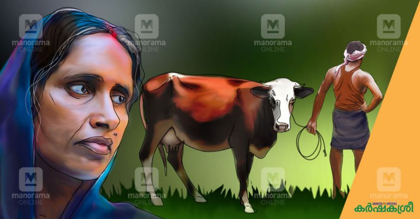 caricature-cow