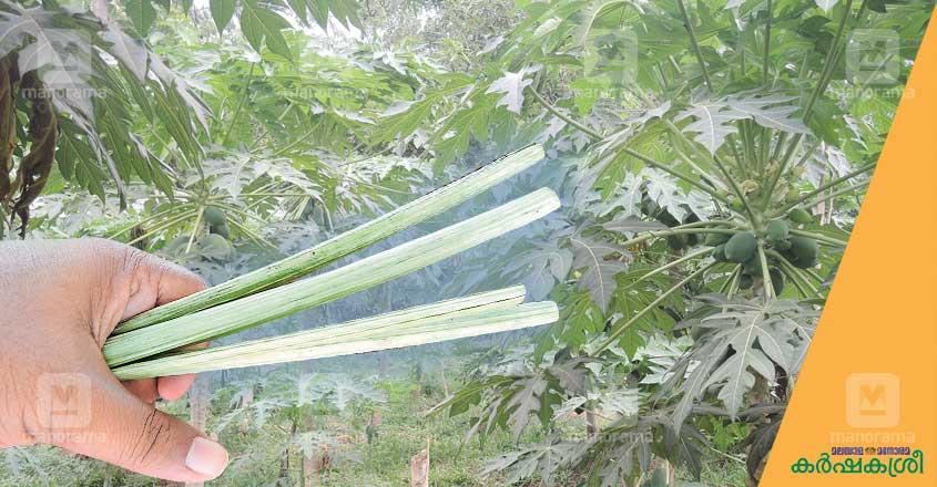 papaya-straw