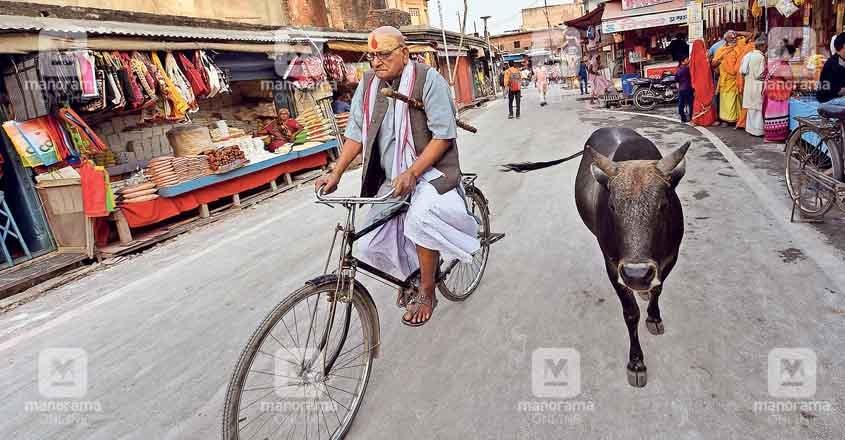 ayodhya-cycle