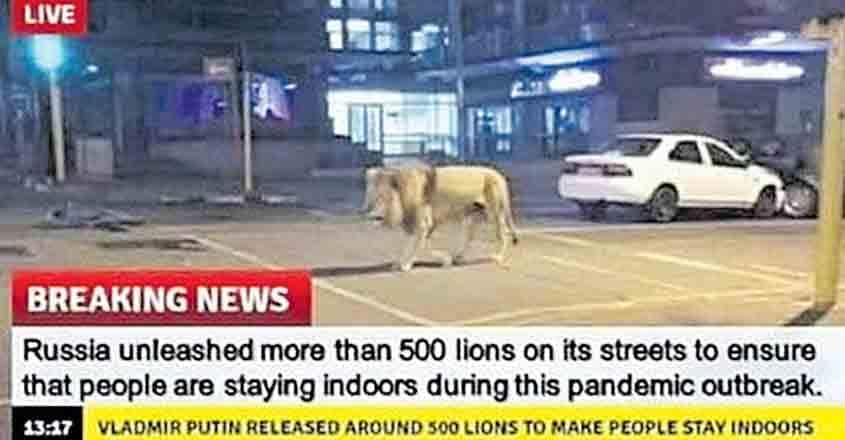 fake-news-lion