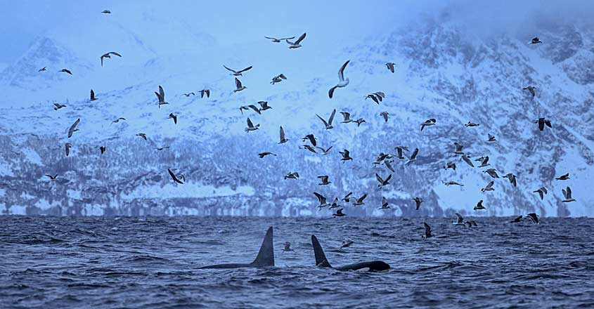 NORWAY-ARCTIC-ENVIRONMENT-Whale