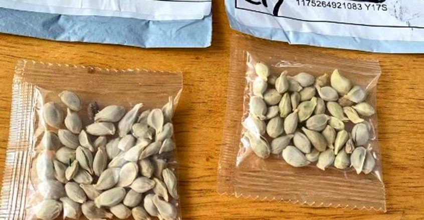us-china-seeds-mystery-1