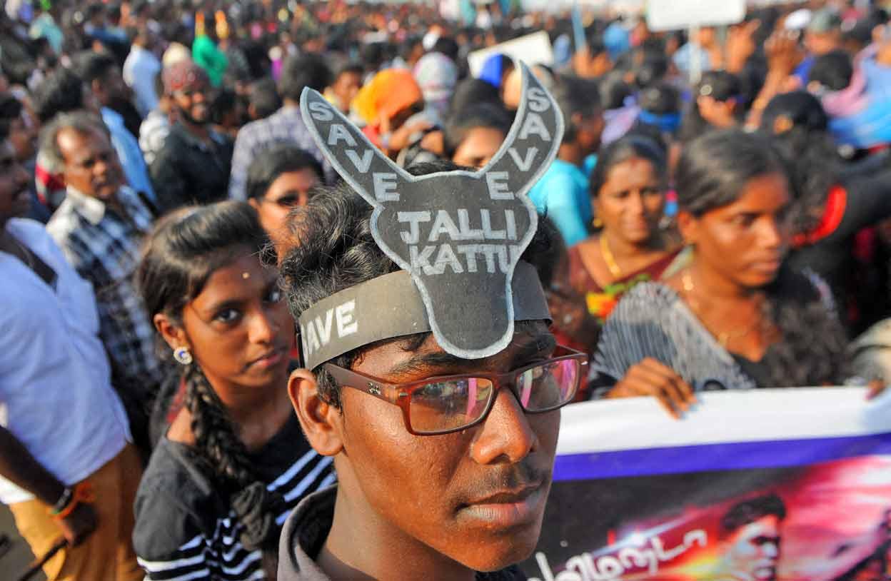 INDIA-ANIMAL-RIGHTS