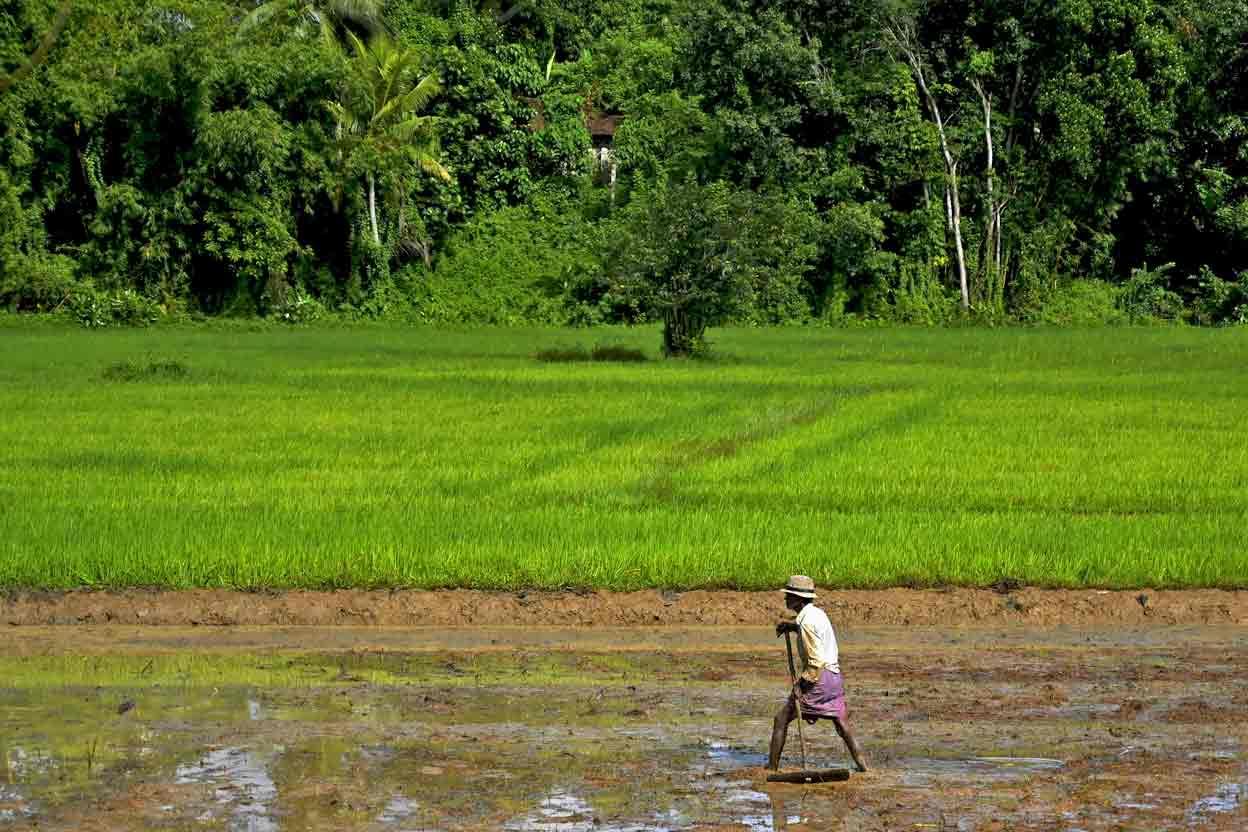 SRI LANKA-ECONOMY-AGRICULTURE