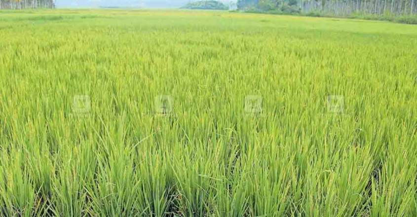 Agriculture-land-1248