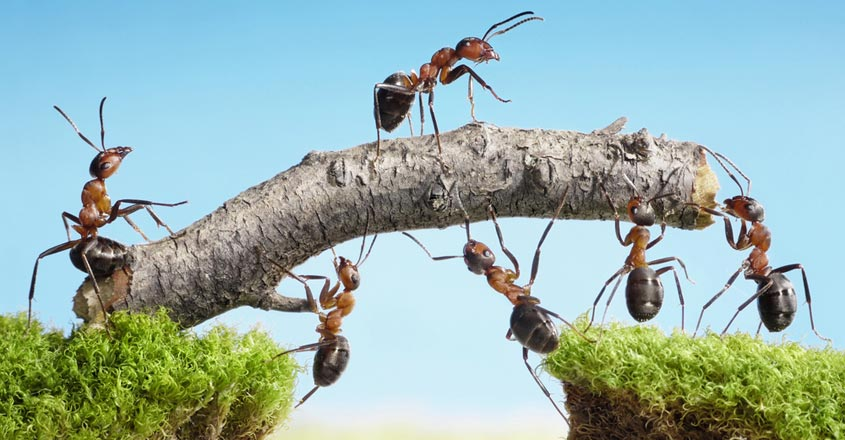 power-of-team-work