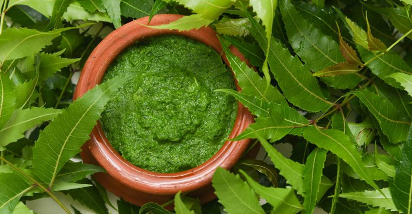 use-power-of-neem-to-prevent-dandruff-and-hair-loss