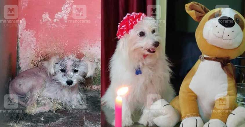 life-of-poppy-a-puppy-owners-decided-to-kill-her