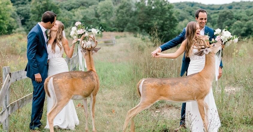 deer-crashes-wedding-phootoshoot-snack-bouquet-video